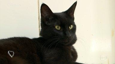 Ana Maria Braga defende os gatos pretos - Apresentadora lamenta que, ainda hoje, os gatos pretos sofram preconceito. Protetora conta que é muito mais difícil conseguir adoção para gatos de cor preta