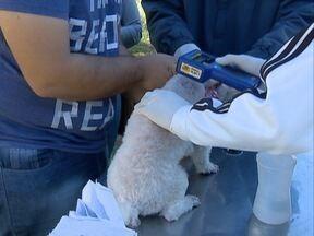 Centro de Controle de Zoonoses realiza chipagem em cães - Ação foi na quadra do Parque do Povo.