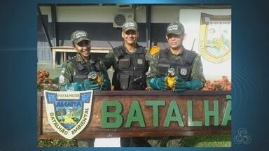 No Amapá, Batalhão Ambiental realiza resgate de casal de araras - No Amapá, Batalhão Ambiental realiza resgate de casal de araras