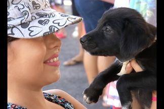 Feira promove adoção de animais em Belém - Praça da República recebeu a feira neste domingo, 22.