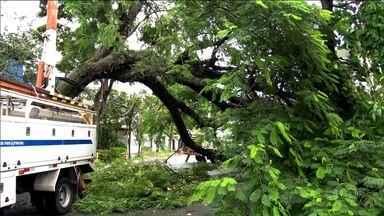 Tempo chuvoso aumenta a queda de árvores em São Paulo - Muitas árvores caem em São Paulo nesta época do ano. A prefeitura planta novas mudas, mas elas nem sempre vão para o mesmo local onde caiu a antiga.