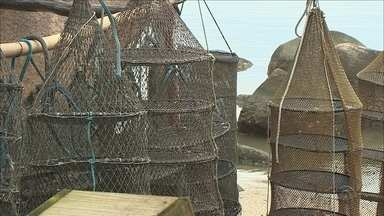 Toxina interdita cultivo de ostras e mexilhões em todo o litoral catarinense - Toxina interdita cultivo de ostras e mexilhões em todo o litoral catarinense