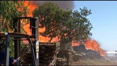 Incêndio destrói galpão em fábrica de paletes na BR-060, em Abadiânia - Fogo começou após funcionários queimarem madeira, diz bombeiro. Chamas chegaram a 7 metros de altura; ninguém ficou ferido.