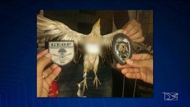 Polícia investiga caso de pássaro que transportava droga para penitenciária na capital - Polícia investiga caso de pássaro que transportava droga para penitenciária na capital.