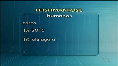 Foz já registrou 10 casos de leishmaniose em humanos neste ano - Todos já foram tratados e não evoluíram para forma grave