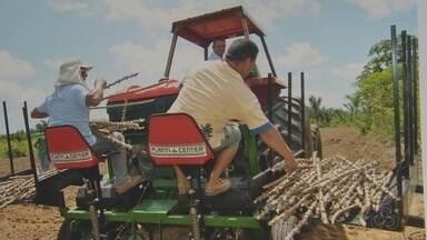 AP elabora plano para reduzir a emissão de gases do efeito estufa nas práticas agrícolas - Com o apoio do Ministério da Agricultura, o Amapá está elaborando um plano para reduzir a emissão de gases do efeito estufa nas práticas agrícolas do estado. Uma das principais dificuldades dos agricultores é a falta de acesso as tecnologias.