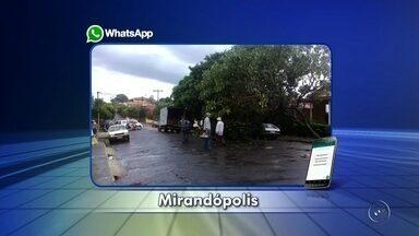 Tempestade derruba árvores na área central de Mirandópolis - Uma chuva forte atingiu voltou a atingir cidades da região noroeste paulista nesta segunda-feira (6). O município atingido desta vez foi Mirandópolis (SP) e a chuva forte chegou a causar alguns transtornos.