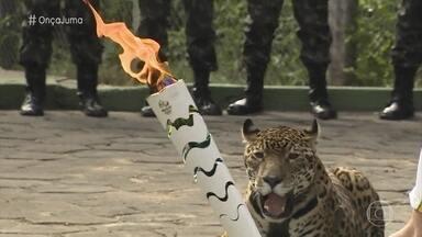 Veterinário comenta polêmica da onça abatida após revezamento da tocha olímpica - André Senna Maia diz que animais que vivem no CIGS, em Manaus, perdem as características selvagens por serem criados em cativeiro, mas têm seus instintos preservados