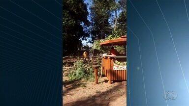 Jovem diz que quase foi atingido por galho que caiu de árvore no Bosque dos Buritis, em GO - O vídeo foi feito no último domingo (19), em Goiânia.
