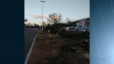 Telespectadores reclamam da derrubada de árvores na Avenida Goiás Norte, em Goiânia - A prefeitura informou que o corte das árvores está autorizado no local e que, para cada árvore retirada, serão plantadas 30 mudas na região.