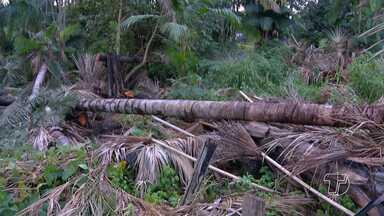 Semma recebe denúncia de desmatamento nas margens do Igarapé do Urumari - Área é de preservação permanente.