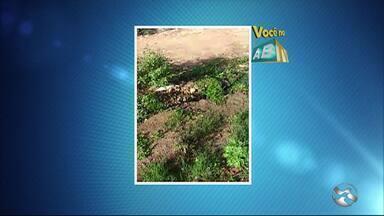 Confira as denúncias do 'Você no ABTV' desta segunda-feira (4) - Problemas são registrados em Caruaru.