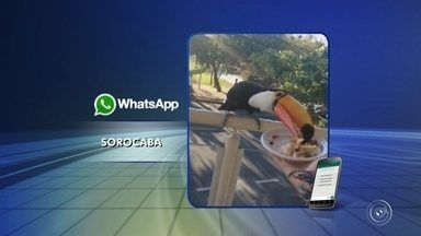 Tucano aparece em restaurante da zona sul de Sorocaba - Clientes de um restaurante da zona sul de Sorocaba (SP) receberam uma visita inusitada durante o almoço nesta segunda-feira (4). Um tucano apareceu no local.