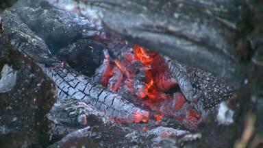 Donos de terrenos que fazem queimadas estão sendo multados - Fiscais da Secretaria de Meio Ambiente estão aplicando em média 6 multas por dia.