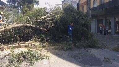 Com risco de queda, prefeitura decide cortar árvores de avenida em Poços de Caldas (MG) - Com risco de queda, prefeitura decide cortar árvores de avenida em Poços de Caldas (MG)
