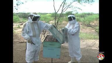 Falta de chuva prejudica produção de mel no Sertão de PE - Estimativa de queda é de 50%.