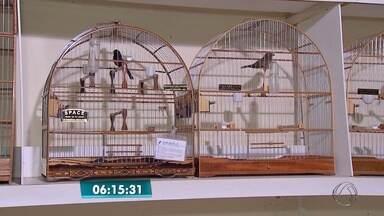 Saiba quais cuidados são precisos para criar pássaros em cativeiro - Donos precisam de autorização e aves precisam de cuidados básicos.
