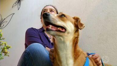 Veterinário fala como cuidar da saúde dos cães no período de inverno - Segundo especialista, animais também podem ficar gripados; confira dicas para evitar este risco.