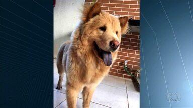 Famílias procuram por cães que sumiram, em Goiânia - Elas pedem ajuda pelo aplicativo QVT.