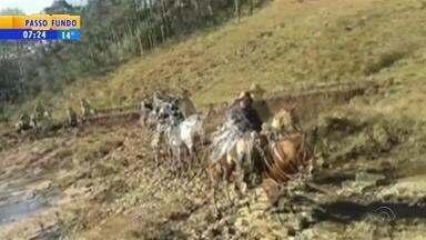 Grupo faz passeio a cavalo no RS e envia vídeo ao Bom Dia Rio Grande - Assista ao vídeo.