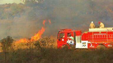 Números de brigadistas dos bombeiros é pequeno para demanda - Números de brigadistas dos bombeiros é pequeno para demanda