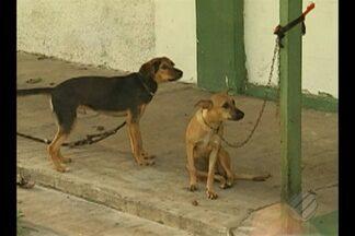 UFRA denuncia o abandono de animais domésticos no campus da universidade em Belém - Só na semana passada, seis foram deixados na instituição, e a maioria está doente.