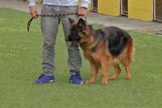Hotéis e babás de cachorros ajudam donos que precisam viajar - Alternativa ajuda quem não pode levar animal de estimação em viagens.