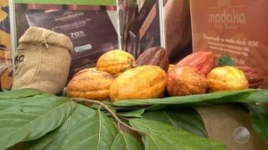 Festival Internacional do Chocolate movimenta Ilhéus, no sul do estado - A região produziu mais de 150 mil toneladas de cacau bruto na safra colhida até abril deste ano.
