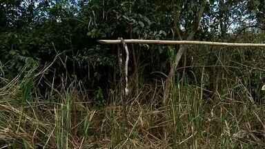 Com soro em falta em hospital, agricultor morre de picada de cobra no interior do Ceará - Com soro em falta em hospital, agricultor morre de picada de cobra no interior do Ceará