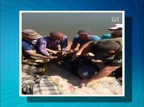 Quatro botos são resgatados no Rio Formoso - Quatro botos são resgatados no Rio Formoso