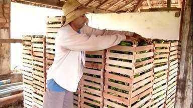 Pequenos agricultores do Rio fornecem alimentos para atletas da Olímpíada - Apenas do município de Itaocara saem 60 mil caixas de legumes, frutas e verduras, que serão utilizados para alimentar os atletas na Vila Olímpica.