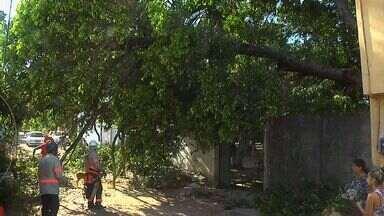 Parte de árvore desaba e atinge casa no Bom Jardim - Ninguém ficou ferido.