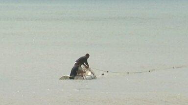 Redes de pesca irregulares são apreendidas em fiscalização no litoral de Marataízes - Doze redes foram apreendidas. Uma arraia e três tartarugas vivas e uma morta foram encontrada presa a elas.