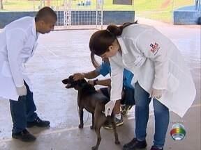 Campanha de vacinação contra a raiva começa na segunda-feira - Cães e gatos serão imunizados em Presidente Prudente.