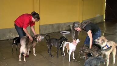 Arrastão Solidário para ajudar cães e gatos acontece no domingo (23) na orla da Pajuçara - Durante a ação, a população pode até adotar os animais.