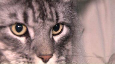 Feira de gatos reúne apaixonados por felinos - Mais de 70 gatos, de várias espécies, estão em exposição em Cascavel.