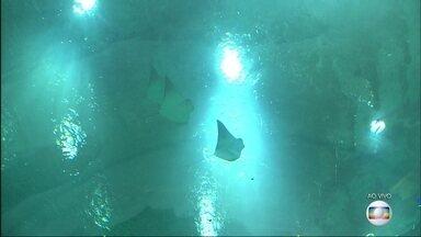 Tanques do AquaRio recebem espécies - O maior aquário da América do Sul conta com 3,5 milhões de litros de água. O espaço deve abrir para visitação a partir de novembro de 2016.