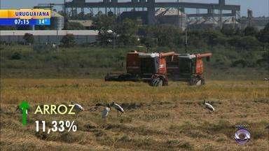 RS pode ter uma das melhores safras de grãos no próximo verão - A produção deve ser de 29,1 milhões de toneladas.