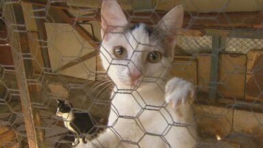 Sem emprego e com ação de despejo, soldador tenta cuidar de 70 gatos - Francisco de Assis Silva mantém os bichos em Santa Cruz das Palmeiras. ONG de proteção animal e prefeitura da cidade não possuem gatil.