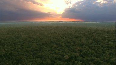 Reserva das Perobas guarda mistérios no noroeste do Paraná (parte 1) - Onça parda já foi flagrada na reserva