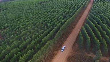 Expedição Campo: carvão - Tecnologia permite produzir carvão sem derrubar florestas nativas e sem poluir.