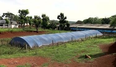Criadores de Santa Catarina estão investindo na captação de água da chuva - Produtores de Santa Catarina enfrentam períodos de estiagem usando águas captadas por cisternas. Elas armazenam água da chuva quando tem, para ser usada quando falta.