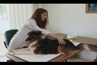 Cão ferido por tamanduá recebe tratamento com células-tronco em Uberlândia - Tratamento começou no início do ano. Confira como está a recuperação do animal.