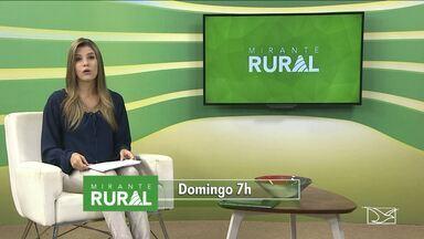 Veja as principais notícias que serão destaque no 'Mirante Rural' deste domingo (11) - Veja as principais notícias que serão destaque no 'Mirante Rural' deste domingo (11)