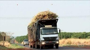 Caminhões com carga sem proteção levam perigo às estradas - Os donos de caminhões de cana tinham ganhado três anos a mais para se adaptar à nova lei e cobrir a carga com uma lona de proteção. Mas o prazo foi adiado mais uma vez para junho de 2017.