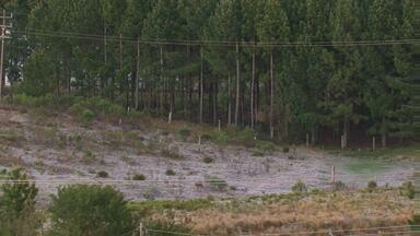 Quinta-feira amanheceu com geada em algumas cidades da região - Temperatura mínima em Guarapuava foi de 1,2 °C