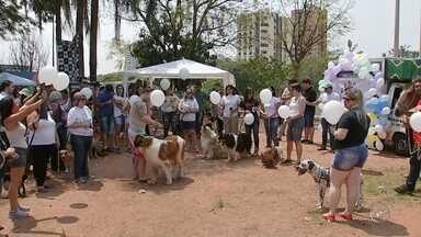 Marcha de Defesa Animal é realizada no domingo em Bauru - A 4ª edição da Marcha de Defesa Animal foi realizada no domingo (18) em Bauru (SP) no parque Vitória Régia. O movimento nacional pediu o aumento de penas do crime de maus-tratos para 8 a 10 anos, hospitais públicos veterinários, vacinação gratuita e castração.