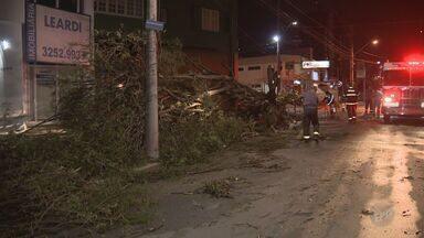 Chuva e fortes ventos derrubam árvores e levam granizo para cidades da região - Em Campinas, uma árvore caiu durante a tempestade e atingiu uma mulher, que ficou levemente ferida.