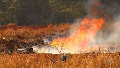 Queimada destrói área de pasto às margens da GO-462, em Goiânia - Vento fez com que chamas persistissem mesmo após trabalho dos bombeiros.Agricultores da região usaram até mesmo um trator para ajudar no combate.