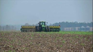 Produtores aumentam área ocupada com soja na safra de verão em MT - Expectativa é de crescimento de 7% na produtividade em relação à safra 2015-2016.